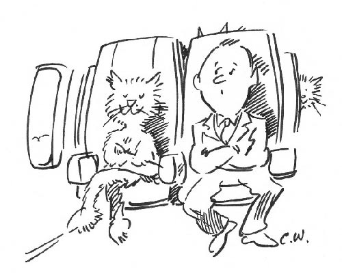 Cats on planes...