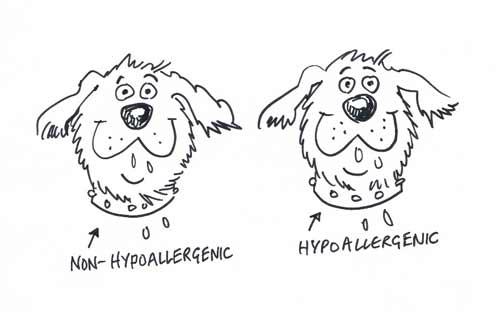 Dogs heads cartoon