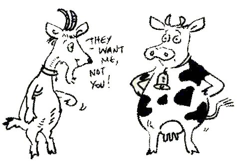 Image result for goats milk  allergies cartoon