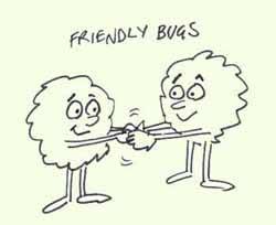 cartoon - bugs